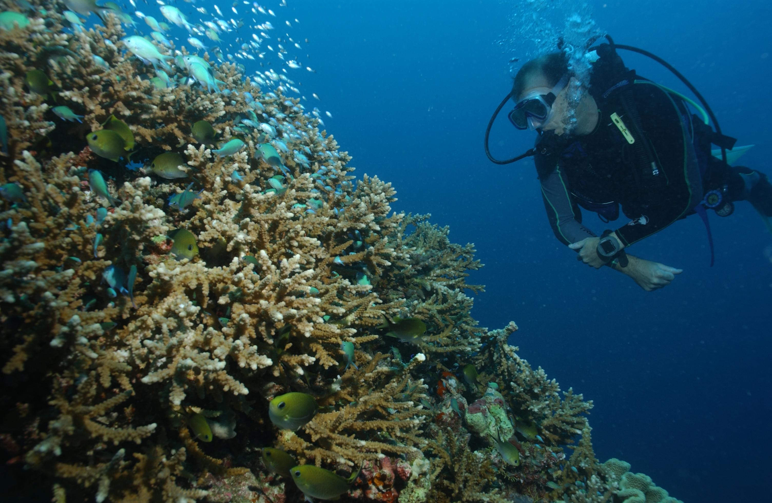 reef life (13)