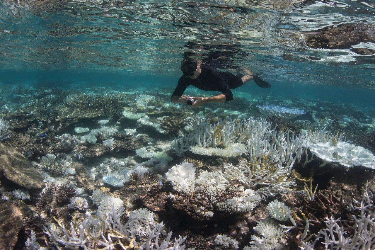 reef life (53)